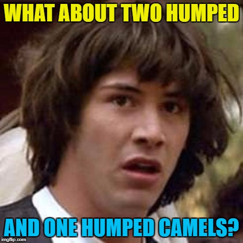 Conspiracy Keanu Meme | WHAT ABOUT TWO HUMPED AND ONE HUMPED CAMELS? | image tagged in memes,conspiracy keanu | made w/ Imgflip meme maker