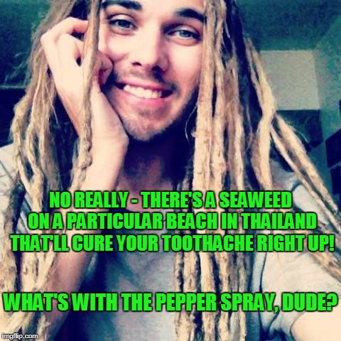 NO REALLY - THERE'S A SEAWEED ON A PARTICULAR BEACH IN THAILAND THAT'LL CURE YOUR TOOTHACHE RIGHT UP! WHAT'S WITH THE PEPPER SPRAY, DUDE? | made w/ Imgflip meme maker