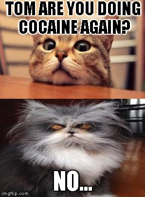 coke cat | TOM ARE YOU DOING COCAINE AGAIN? NO... | image tagged in cocaine,cat,cat on drugs,drugs | made w/ Imgflip meme maker