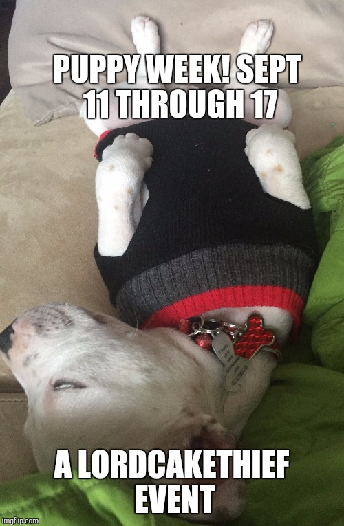 I LAID IT OUT FOR YOU. :D | PUPPY WEEK! SEPT 11 THROUGH 17 A LORDCAKETHIEF EVENT | image tagged in funny,animals,dogs,humor,puppy week,memes | made w/ Imgflip meme maker