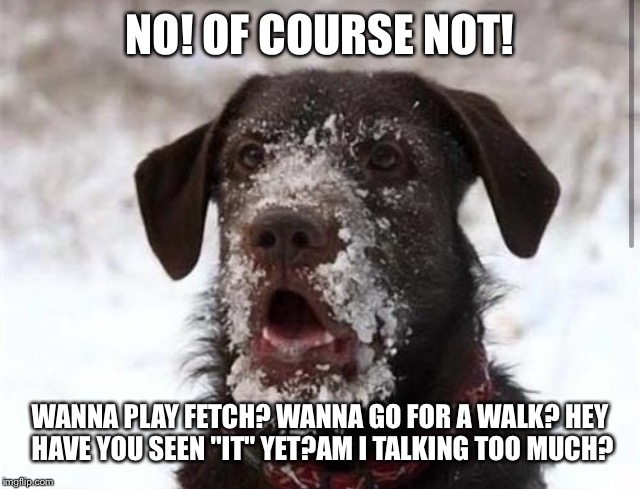 "NO! OF COURSE NOT! WANNA PLAY FETCH? WANNA GO FOR A WALK? HEY HAVE YOU SEEN ""IT"" YET?AM I TALKING TOO MUCH? 