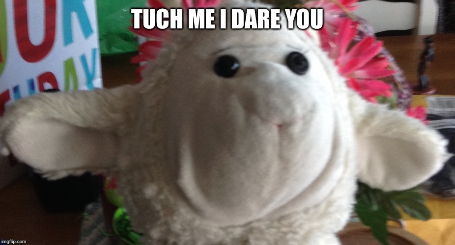 TUCH ME I DARE YOU | image tagged in my life | made w/ Imgflip meme maker