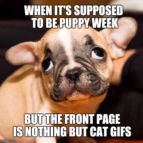 Puppy Week - A Lordcakethief Event, June 11th -17th | WHEN IT'S SUPPOSED TO BE PUPPY WEEK BUT THE FRONT PAGE IS NOTHING BUT CAT GIFS | image tagged in jbmemegeek,cute puppies,puppy week,funny dogs,funny cats,puppy | made w/ Imgflip meme maker