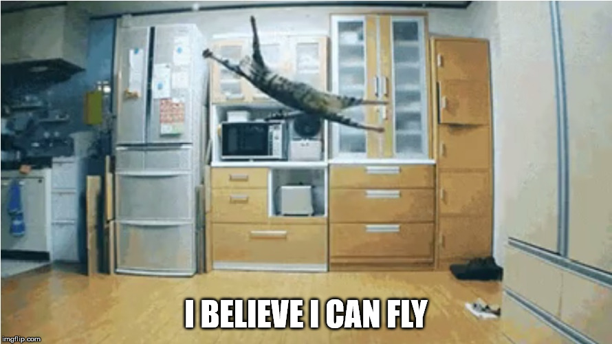 I Believe I Can Fly | I BELIEVE I CAN FLY | image tagged in i believe i can fly,stupid cat tricks,the most interesting cat in the world,funny cat memes,gotta go cat,ceiling cat | made w/ Imgflip meme maker