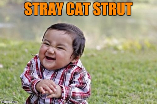 Evil Toddler Meme | STRAY CAT STRUT | image tagged in memes,evil toddler | made w/ Imgflip meme maker
