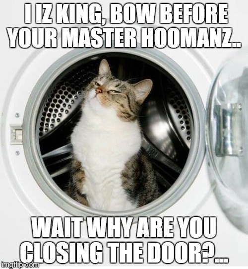 washer/dryer cat | I IZ KING, BOW BEFORE YOUR MASTER HOOMANZ.. WAIT WHY ARE YOU CLOSING THE DOOR?... | image tagged in washer/dryer cat | made w/ Imgflip meme maker