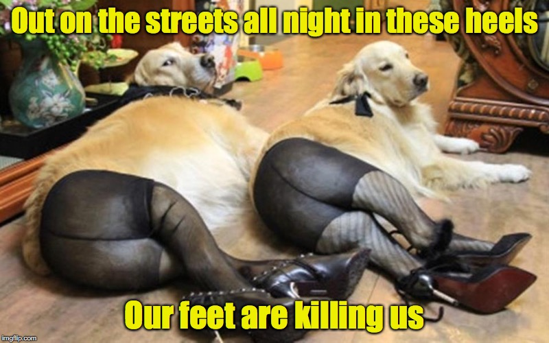 The hazards of one's chosen profession | Out on the streets all night in these heels Our feet are killing us | image tagged in dog,pantyhose | made w/ Imgflip meme maker