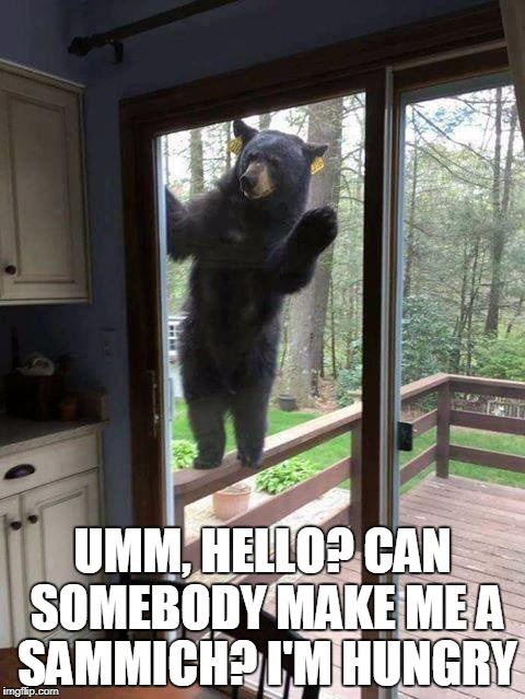 Hello | UMM, HELLO? CAN SOMEBODY MAKE ME A SAMMICH? I'M HUNGRY | image tagged in hello bear | made w/ Imgflip meme maker