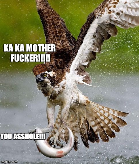 awesome fucking hawk  | KA KA MOTHER F**KER!!!!! YOU ASSHOLE!!! | image tagged in hawk | made w/ Imgflip meme maker