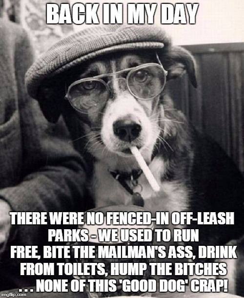 now my food is freakin' vegan!!! | BACK IN MY DAY THERE WERE NO FENCED-IN OFF-LEASH PARKS - WE USED TO RUN FREE, BITE THE MAILMAN'S ASS, DRINK FROM TOILETS, HUMP THE B**CHES . | image tagged in back in my day - dog,memes,back in my day,back in my day dog,dogs | made w/ Imgflip meme maker
