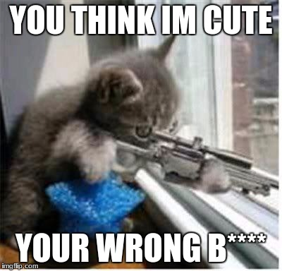 cats with guns | YOU THINK IM CUTE YOUR WRONG B**** | image tagged in cats with guns | made w/ Imgflip meme maker