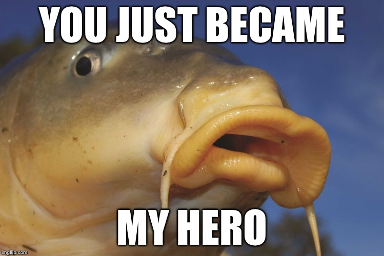 Carp | YOU JUST BECAME MY HERO | image tagged in carp | made w/ Imgflip meme maker