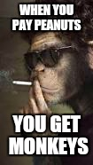 WHEN YOU PAY PEANUTS YOU GET MONKEYS | made w/ Imgflip meme maker
