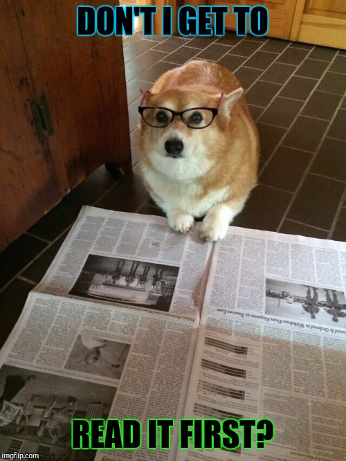 PAPER TRAINING FOR PUPPY WEEK! SEPT 11-17 A LORDCAKETHIEF EVENT :D | DON'T I GET TO READ IT FIRST? | image tagged in newspaper dog,funny,memes,dogs,animals,puppy week | made w/ Imgflip meme maker