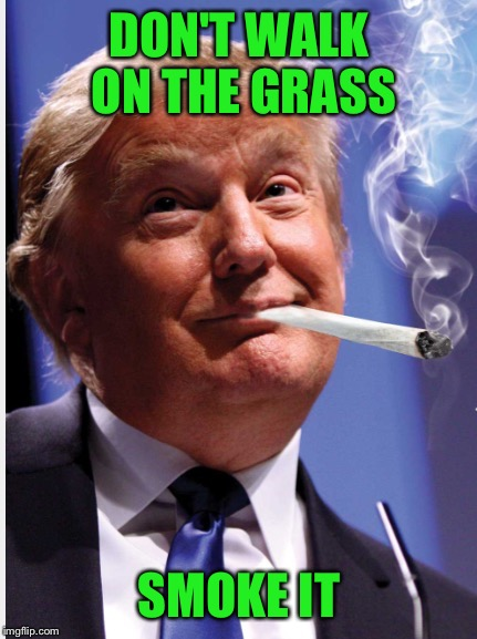 DON'T WALK ON THE GRASS SMOKE IT | made w/ Imgflip meme maker