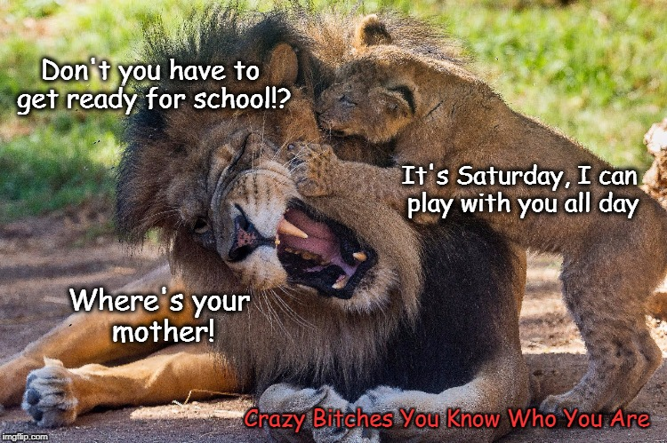 Don't you have to get ready for school!? Crazy B**ches You Know Who You Are It's Saturday, I can play with you all day Where's your mother! | image tagged in saturday,lion | made w/ Imgflip meme maker