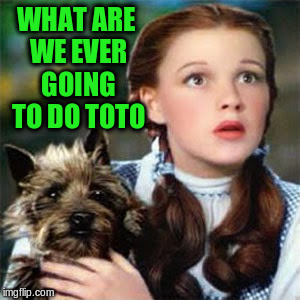 WHAT ARE WE EVER GOING TO DO TOTO | made w/ Imgflip meme maker