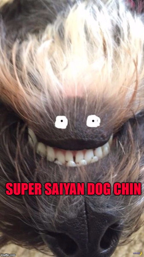 Puppy Week...A LordCakeThief Event | SUPER SAIYAN DOG CHIN | image tagged in super saiyan,memes,dogs,funny,dragonball z,animals | made w/ Imgflip meme maker
