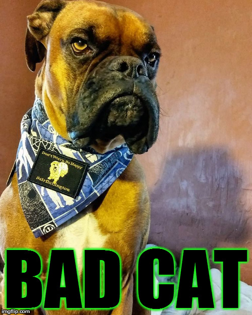 Grumpy Dog | BAD CAT | image tagged in grumpy dog | made w/ Imgflip meme maker