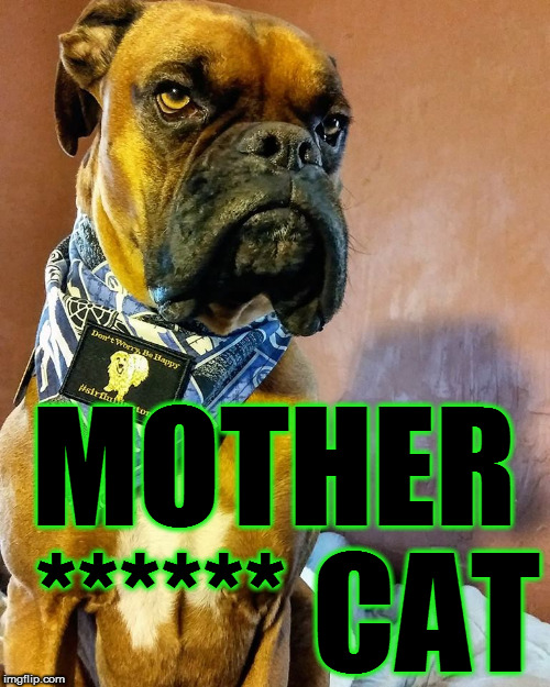Grumpy Dog | MOTHER ****** CAT | image tagged in grumpy dog | made w/ Imgflip meme maker