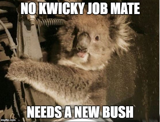 No Kwicky Job | NO KWICKY JOB MATE NEEDS A NEW BUSH | image tagged in kwicky koala,suspension,australia,mechanic | made w/ Imgflip meme maker