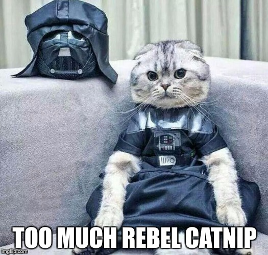 Darth Cat | TOO MUCH REBEL CATNIP | image tagged in darth cat | made w/ Imgflip meme maker