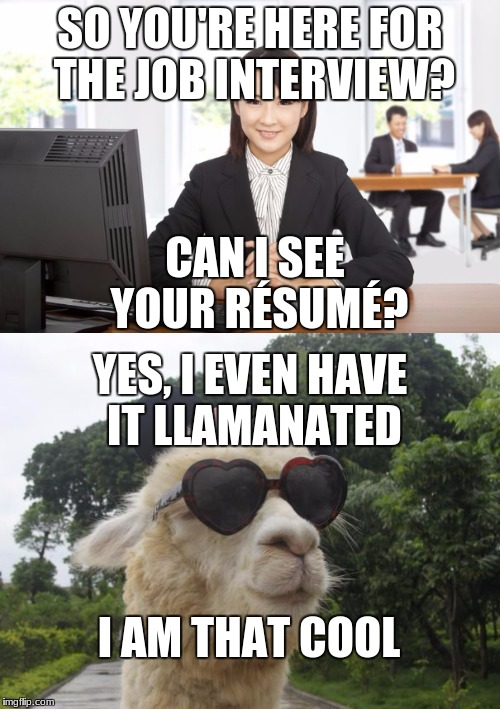 LLAMANATED | SO YOU'RE HERE FOR THE JOB INTERVIEW? CAN I SEE YOUR RÉSUMÉ? YES, I EVEN HAVE IT LLAMANATED I AM THAT COOL | image tagged in llamanated | made w/ Imgflip meme maker