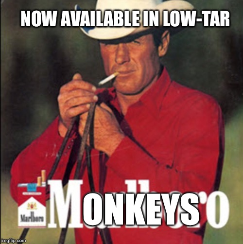 ONKEYS NOW AVAILABLE IN LOW-TAR | made w/ Imgflip meme maker