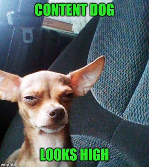 Stoner dog | CONTENT DOG LOOKS HIGH | image tagged in stoner dog | made w/ Imgflip meme maker