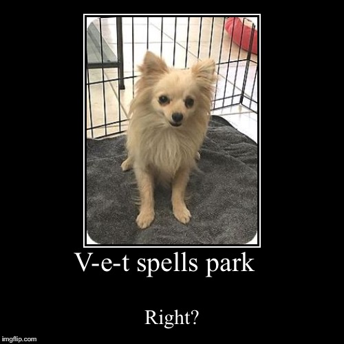 V-e-t spells park | Right? | image tagged in funny,demotivationals | made w/ Imgflip demotivational maker