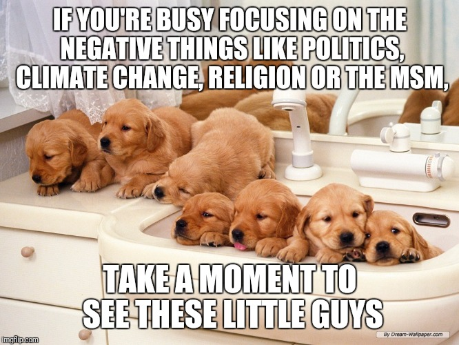 We need a break, aren't we? | IF YOU'RE BUSY FOCUSING ON THE NEGATIVE THINGS LIKE POLITICS, CLIMATE CHANGE, RELIGION OR THE MSM, TAKE A MOMENT TO SEE THESE LITTLE GUYS | image tagged in memes,dogs,cute | made w/ Imgflip meme maker