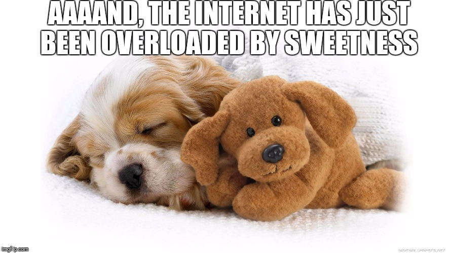 Top this sweetness, I dare ya... | AAAAND, THE INTERNET HAS JUST BEEN OVERLOADED BY SWEETNESS | image tagged in jbmemegeek,puppy week,cute puppies,cute animals,puppies,puppies and kittens | made w/ Imgflip meme maker
