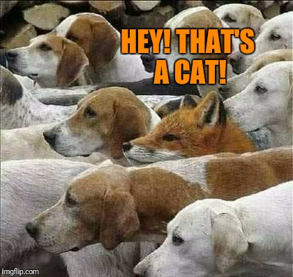 Fox and Foxhounds | HEY! THAT'S A CAT! | image tagged in fox and foxhounds | made w/ Imgflip meme maker