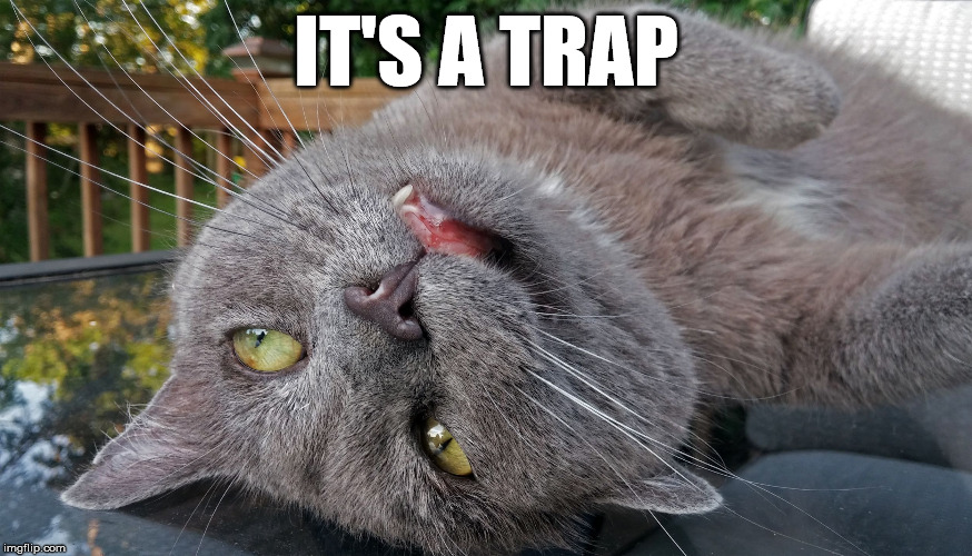 Faded Cat | IT'S A TRAP | image tagged in faded cat | made w/ Imgflip meme maker