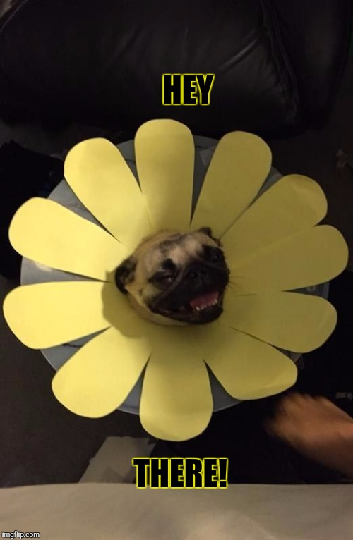 FLOWER PUG | HEY THERE! | image tagged in flower pug,funny,memes,dogs,animals,pets | made w/ Imgflip meme maker