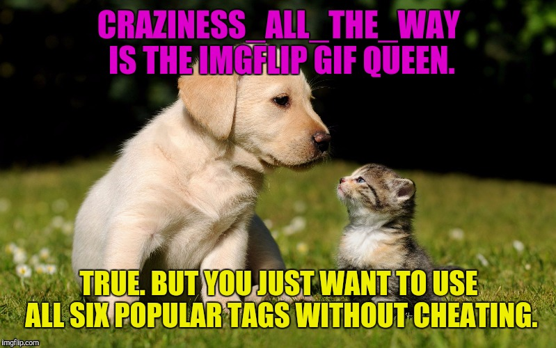 SCRATCH THAT ONE OFF THE BUCKET LIST! :D ALSO IT'S THE LAST DAY OF PUPPY WEEK A LORDCAKETHIEF EVENT | CRAZINESS_ALL_THE_WAY IS THE IMGFLIP GIF QUEEN. TRUE. BUT YOU JUST WANT TO USE ALL SIX POPULAR TAGS WITHOUT CHEATING. | image tagged in funny,memes,animals,cats,dogs,gifs | made w/ Imgflip meme maker