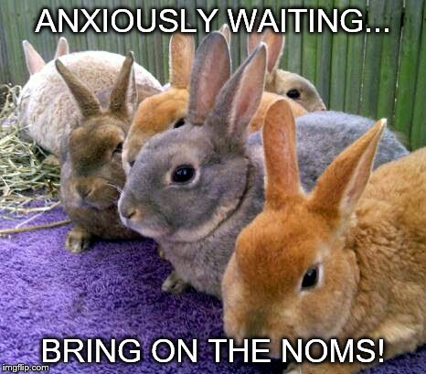 Waiting | ANXIOUSLY WAITING... BRING ON THE NOMS! | image tagged in animal meme | made w/ Imgflip meme maker