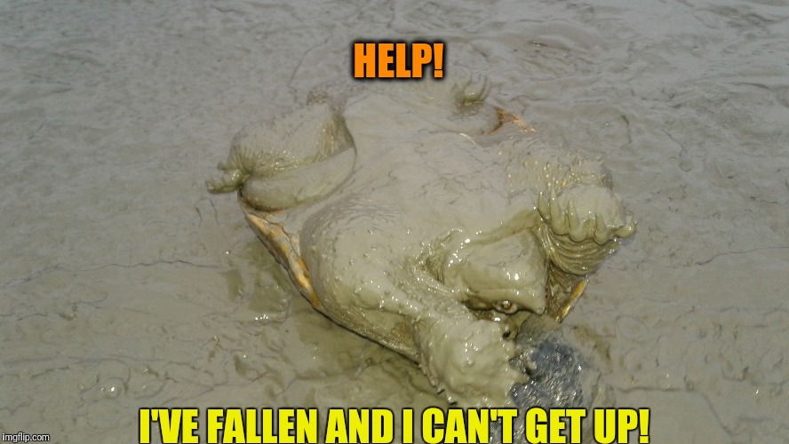HELP! I'VE FALLEN AND I CAN'T GET UP! | image tagged in on my back | made w/ Imgflip meme maker
