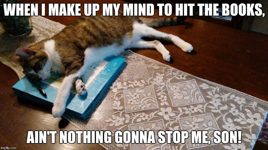 WHEN I MAKE UP MY MIND TO HIT THE BOOKS, AIN'T NOTHING GONNA STOP ME, SON! | image tagged in studying,books,funny,cats | made w/ Imgflip meme maker