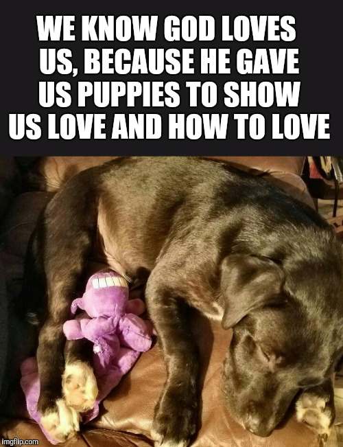 I couldn't let Puppy Week get by without submitting a pic of my sweet puppy, Clover sleeping on the couch with his favorite toy! | WE KNOW GOD LOVES US, BECAUSE HE GAVE US PUPPIES TO SHOW US LOVE AND HOW TO LOVE | image tagged in puppy week,cute puppies,cute animals,dogs,jbmemegeek,inspirational quote | made w/ Imgflip meme maker