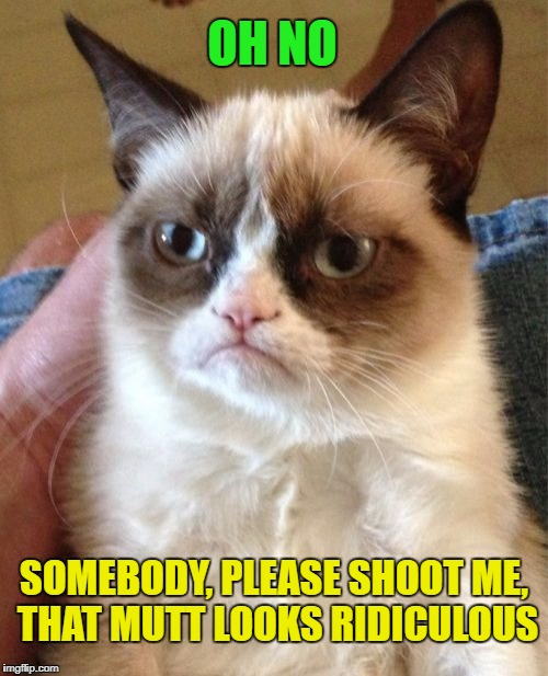 Grumpy Cat Meme | OH NO SOMEBODY, PLEASE SHOOT ME, THAT MUTT LOOKS RIDICULOUS | image tagged in memes,grumpy cat | made w/ Imgflip meme maker