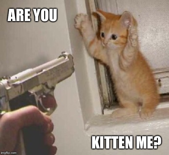 ARE YOU KITTEN ME? | made w/ Imgflip meme maker