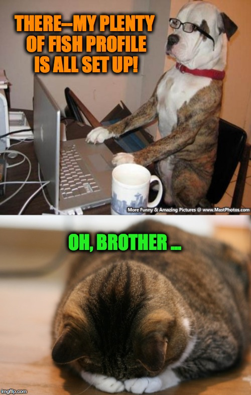 Doggo Needs A Hobby | THERE--MY PLENTY OF FISH PROFILE IS ALL SET UP! OH, BROTHER ... | image tagged in profile | made w/ Imgflip meme maker