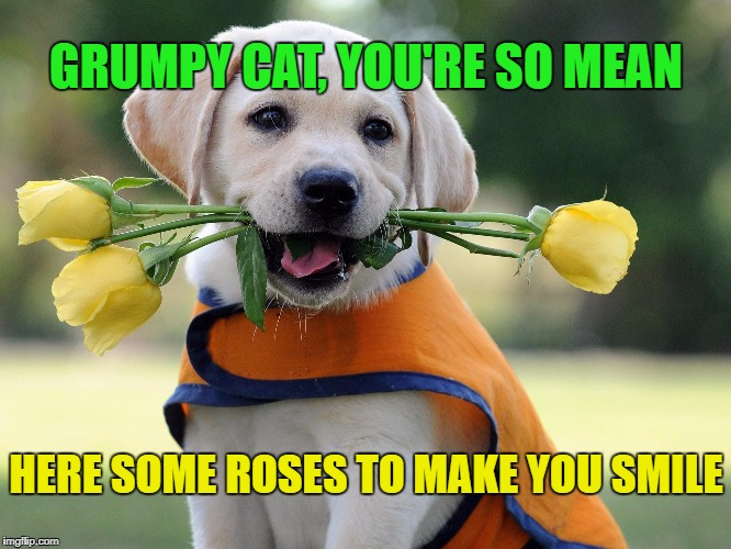 GRUMPY CAT, YOU'RE SO MEAN HERE SOME ROSES TO MAKE YOU SMILE | made w/ Imgflip meme maker