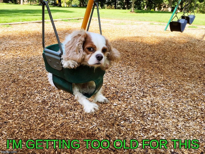 king charles cavalier spaniel | I'M GETTING TOO OLD FOR THIS | image tagged in dogs,cute dogs,sad dog | made w/ Imgflip meme maker