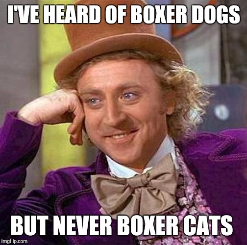 Creepy Condescending Wonka Meme | I'VE HEARD OF BOXER DOGS BUT NEVER BOXER CATS | image tagged in memes,creepy condescending wonka | made w/ Imgflip meme maker