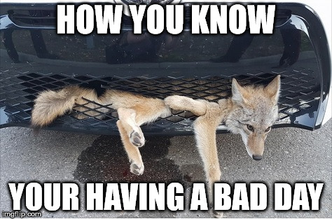 Having a Bad Day | HOW YOU KNOW YOUR HAVING A BAD DAY | image tagged in having a bad day,mondays,wile e coyote,minding my own business when,what does the fox say,instant regret | made w/ Imgflip meme maker