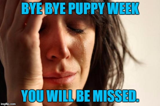 First World Problems Meme | BYE BYE PUPPY WEEK YOU WILL BE MISSED. | image tagged in memes,first world problems | made w/ Imgflip meme maker