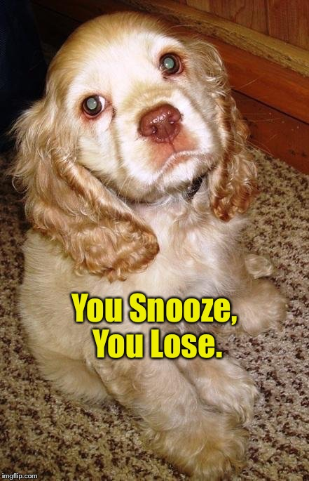 You Snooze, You Lose. | made w/ Imgflip meme maker