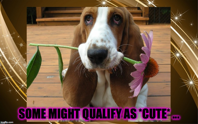 SOME MIGHT QUALIFY AS *CUTE* ... | made w/ Imgflip meme maker